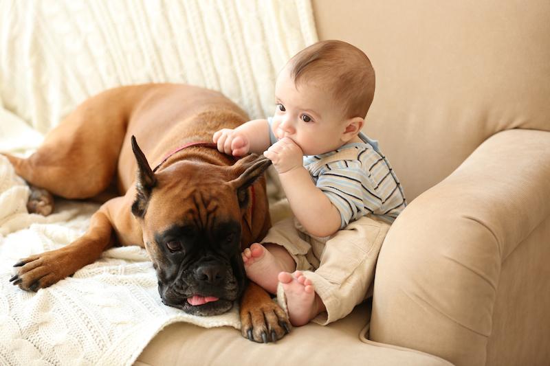 Dítě vyrůstá se psem