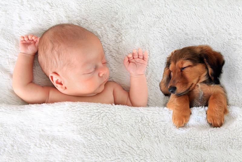 Miminko a pes