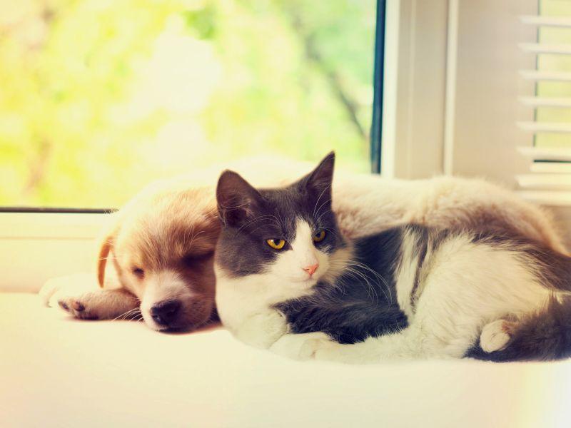 Pes a kočka v domácnosti s miminkem