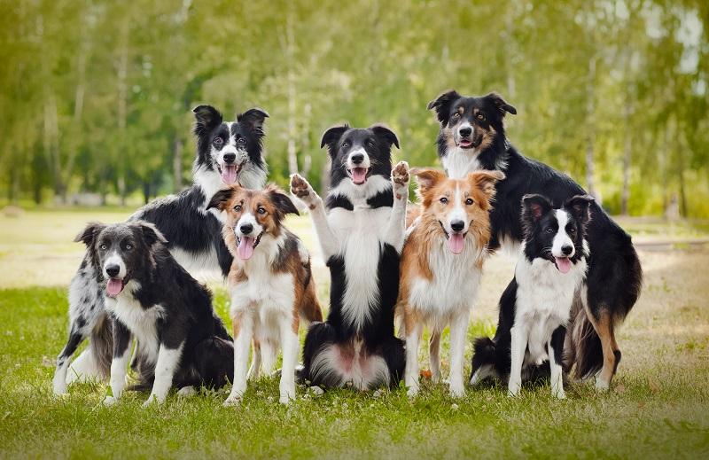 Aktivní psi a kolie