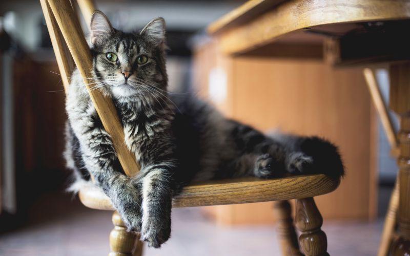 Kočka odpočívá na židli