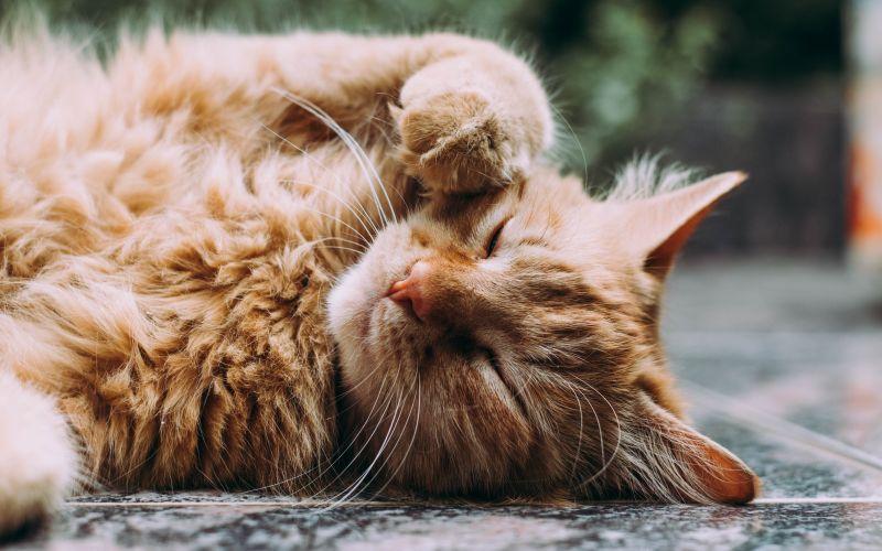 Spící kočka na podlaze