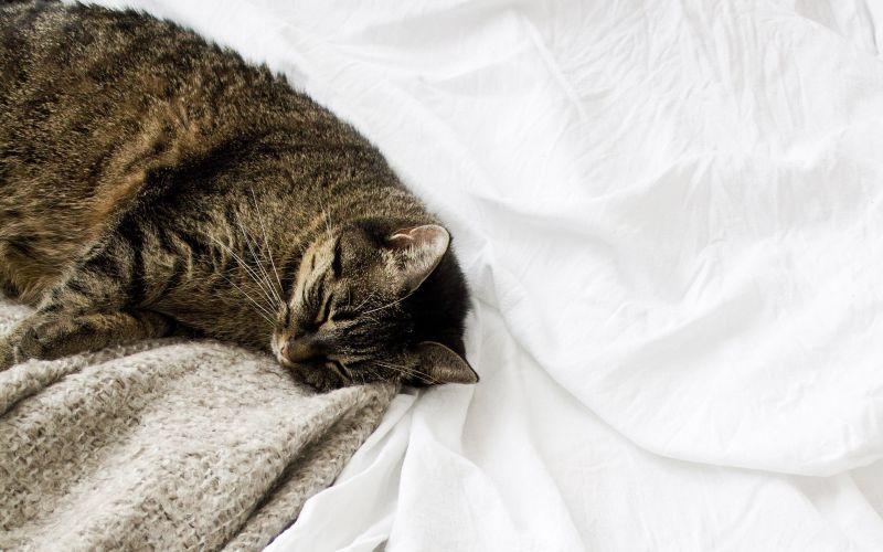 Kočka odpočívá v posteli
