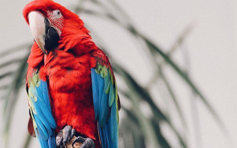 Červený papoušek na stromě