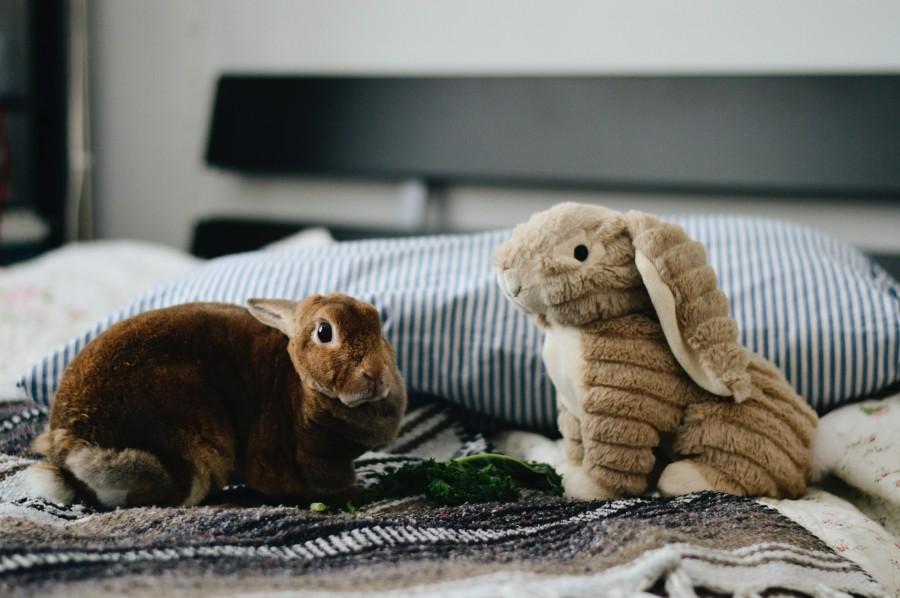 Hračka pro králíka